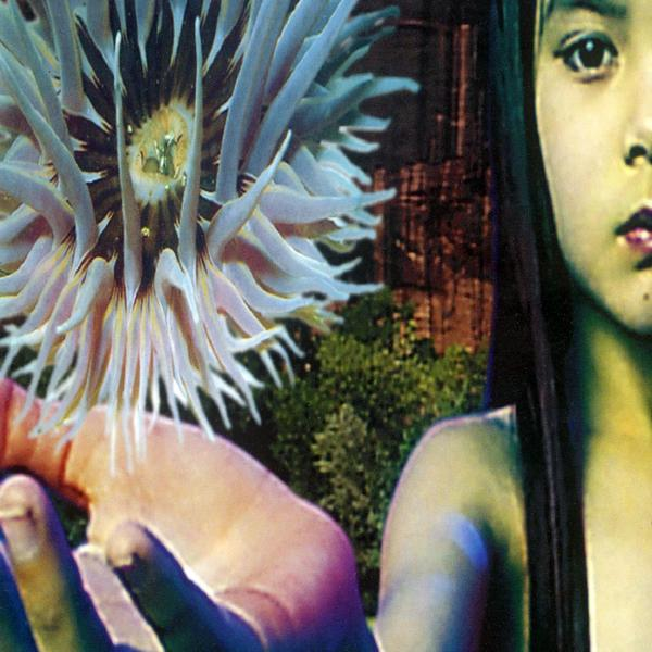 'Lifeforms'