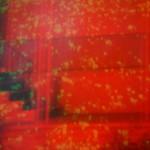 Nicholas Bullen - 'Component Fixations'