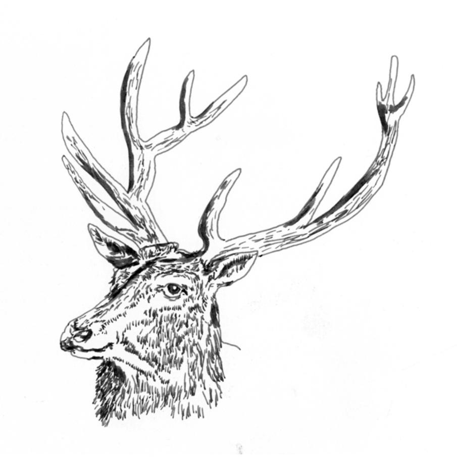 Black Deer - self-titled album