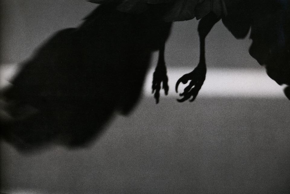 koen-dori-shibuya-1982